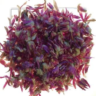 Amaranth Petals - dry