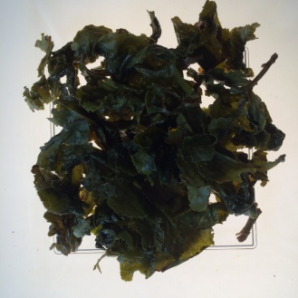 Quangzhou Milk Oolong - wet