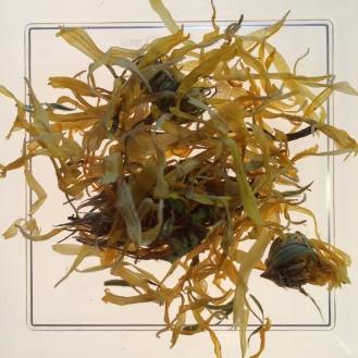 Calendula - dry